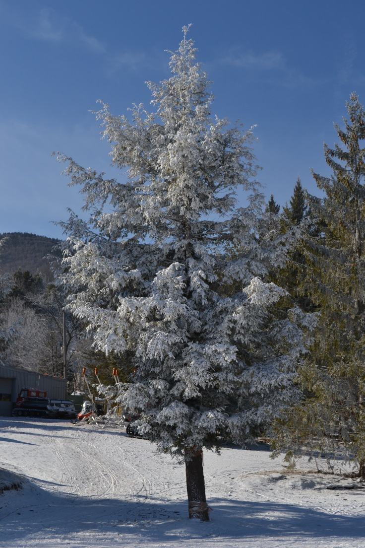 hunter-mountain-arbre